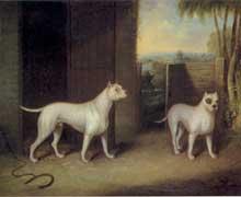 engelsk staffordshire bull terrier