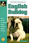 Guide to Owning an English Bulldog