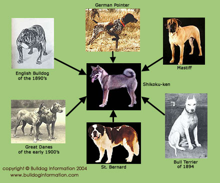 Tosa inu history and breed information