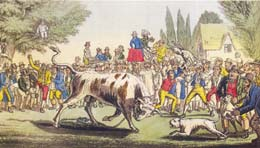 Bull Baiting Bullbaiting History Of