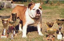 International Bulldog Chamion