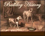 Old bulldogs of the 1800s