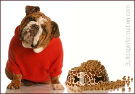 Bulldog Nutrition Feeding Your Bulldog