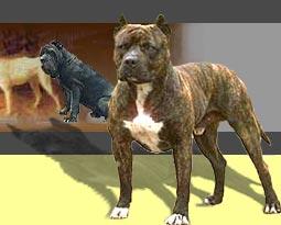 Dog historically bred for