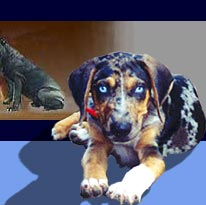 Catahoula owners say it is