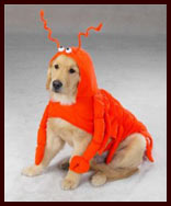 Lobster Dog Halloween Costume for large dogs