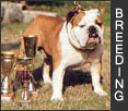 Tips for bulldog breeders