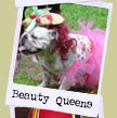 Bulldog brides and beauty queens