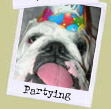 Partying Bulldogs