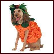 Pumpkin Pet Costume  sc 1 st  Bulldog & Halloween Dog Costumes