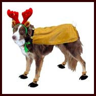 star led lighted christmas dog sweater available sizes x large large medium small x small - Large Dog Christmas Outfits
