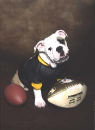 Steelers bulldog mascot