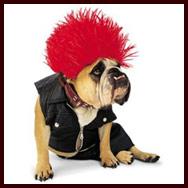 Zelda punk rock bulldog costume & Bulldog Costumes and Clothes (Halloween Dog Costumes)